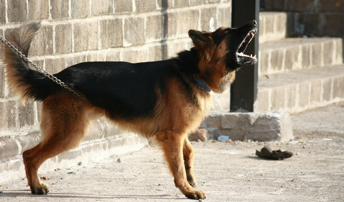 Aggressive Behavior in German Shepherds
