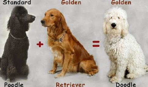 creating dog breeds